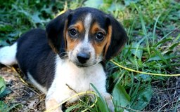 How To Train Dogs To Find Antlers Dog Care The Daily Puppy