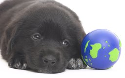What Age Does A Puppy Start Service Dog Training