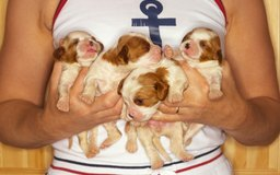 Embryonic Development in a Canine   Dog Care - The Daily Puppy
