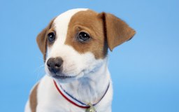 aspca complete dog care manual