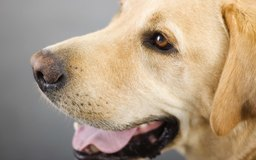 Can Too Much Rawhide Make Dog Sick