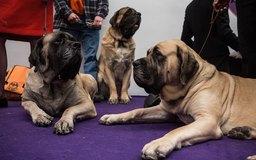 Hardest Dog Breeds To Housebreak