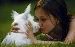 how to train a puppy with commands dog care   the daily puppy