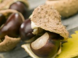 How to Germinate a Horse Chestnut