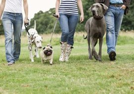 Taking shelter dogs for walks can provide them with socialization and exercise.