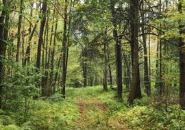 Human intervention significantly reduces forest cover.