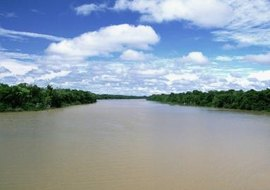 The Amazon Basin harbors the world's largest tropical rain forest.