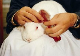 Many proponents of animal research agree that animals should receive humane treatment.