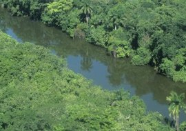 The dense rain forest canopy is home to much of its animal and plant life.