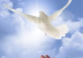 The dove symbolizes peace in both the Old and New Testaments.