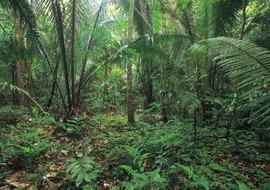 Each level of the rain forest is its own distinct ecosystem.