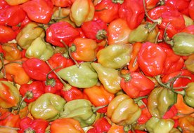 Habanero Pepper Benefits
