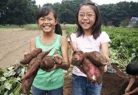 Japanese Sweet Potato Nutrition