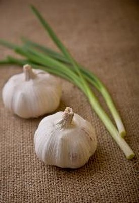Benefits of Garlic & Onions