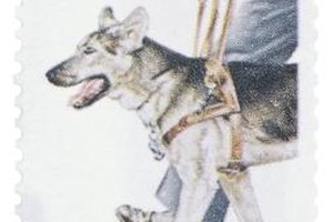 Disabled individuals can obtain service dogs through specialized organizations.