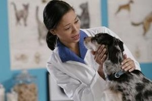 A DVM is a Doctor of Veterinary Medicine.