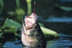 Rubber worms are some of the most popular bass lures.