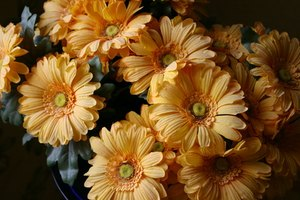 How to choose flowers for a baby funeral our everyday life for Flowers that represent love