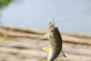 Before fish can be caught, the fishing line must be set up.