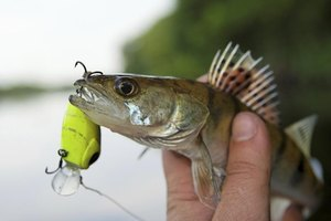 Bright green lures are often effective for walleyes in deep water.