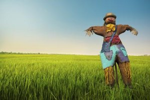 Competitions to build scarecrows can effectively raise money.