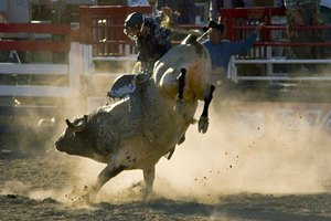 Bull Riding Schools in California