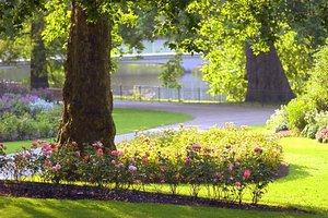 Online Horticulture Degree Programs