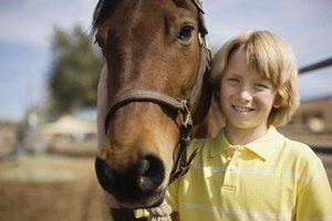 Science Fair Project Ideas: Equine