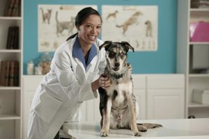Most veterinarians choose to work with small animals such as pets.