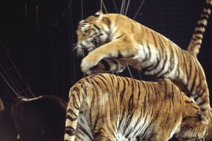 Pros & Cons of the Circus Animals