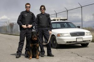 K-9 patrol is one area of police work to consider.