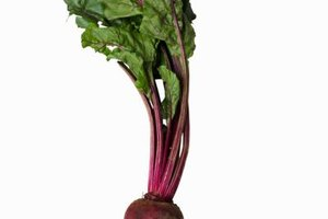 Beet greens cook more quickly than beet roots, so they should be cooked separately.