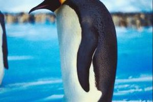 Penguins are structurally well adapted to their cold, aquatic environment.