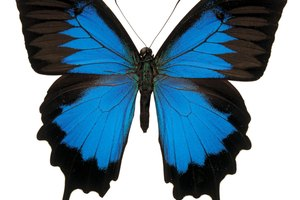 Christian Soul Symbolism: The Butterfly & Psyche