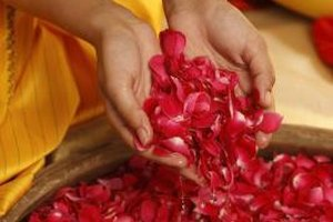 Rose petals are gathered at the peak of bloom to create the aromatic rosewater.
