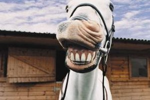 Educated horse owners understand that good dental care is essential to their horses' overall health.
