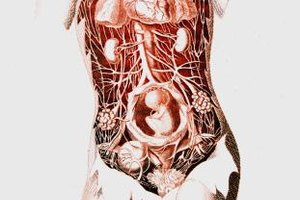 Through a physiology major, you'll learn about the inner workings of the human body.