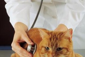 Veterinary school admission requires declaring a pre-veterinary major and taking the GRE.