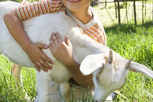 How to Introduce Farm Animals to Preschoolers
