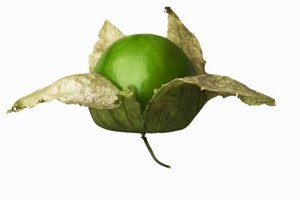 Purchase tomatillos that are firm and still wrapped in their husk.