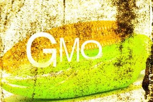 Genetically modified organisms, or GMOs, have many potential benefits.