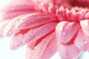 Condensation creates morning dew on flowers.