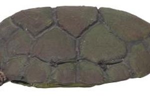Use gray, green and brown clay to make a friendly turtle.