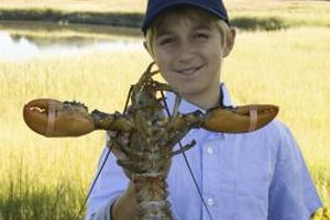 Even if your child is too young to catch a lobster, Maine can be a lot of fun.