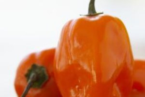 Hot habanero peppers can be added to everything from salsa to soup.