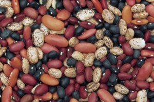 Dry beans harden over time but remain edible for years.