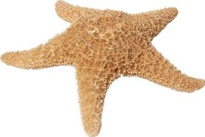 Your toddler will love touching the starfish at Manhattan Beach's Roundhouse Aquarium.