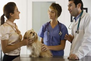 Veterinarians work with both animals and their owners.