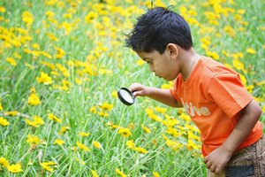 The Importance of Environmental Education in Elementary Schools