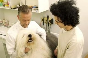 Pets ensure a high demand for veterinarians